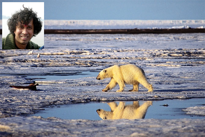 Polar bear on bernard harbor, Barter Island, June 2001; Inset: Subhankar Banerjee