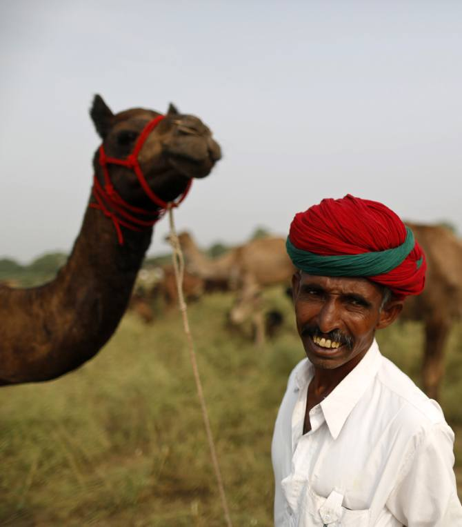A camel trader wearing traditional headgear looks on as he holds his camel.