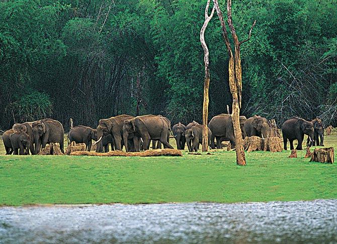 Periyar Wildlife Sanctuary, Thekkady, Kerala