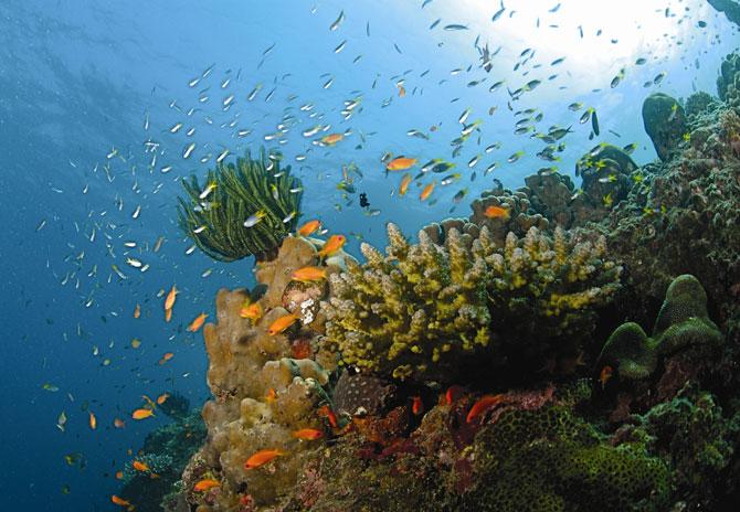 The underwater beauty surrounding the Andaman islands.