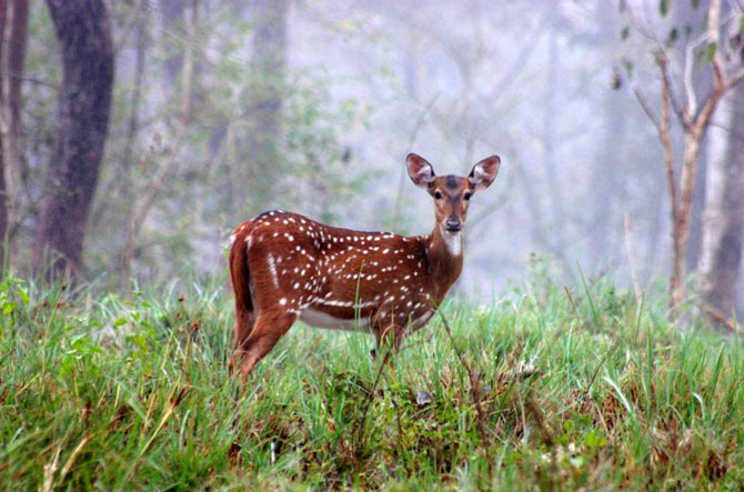 Mudumalai National Park and Wildlife Sanctuary, Tamil Nadu.