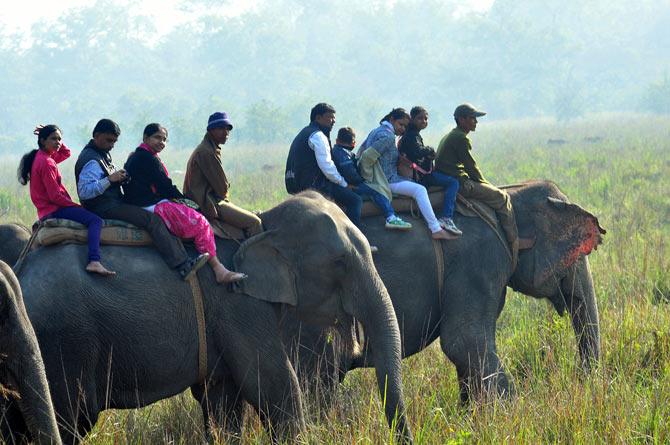 Pobitora Wild Life Sanctuary, Assam