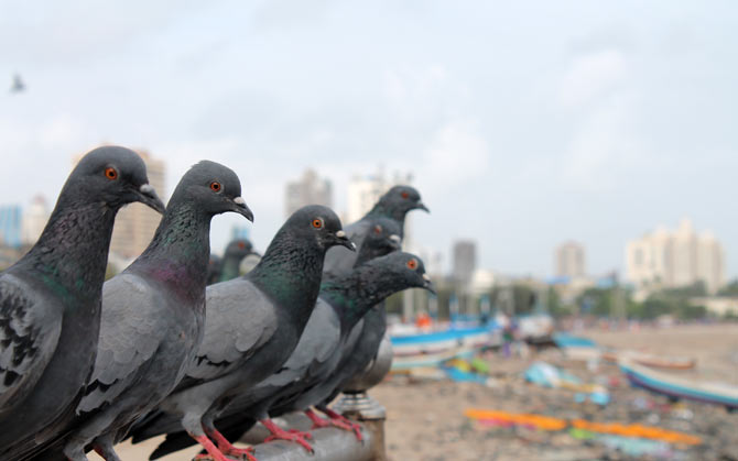 Girgaum Chowpatty, near Marine Drive, Mumbai