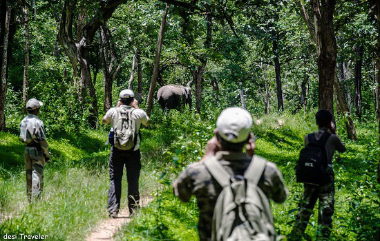 Jungle Talkies: A walk in Bandipur