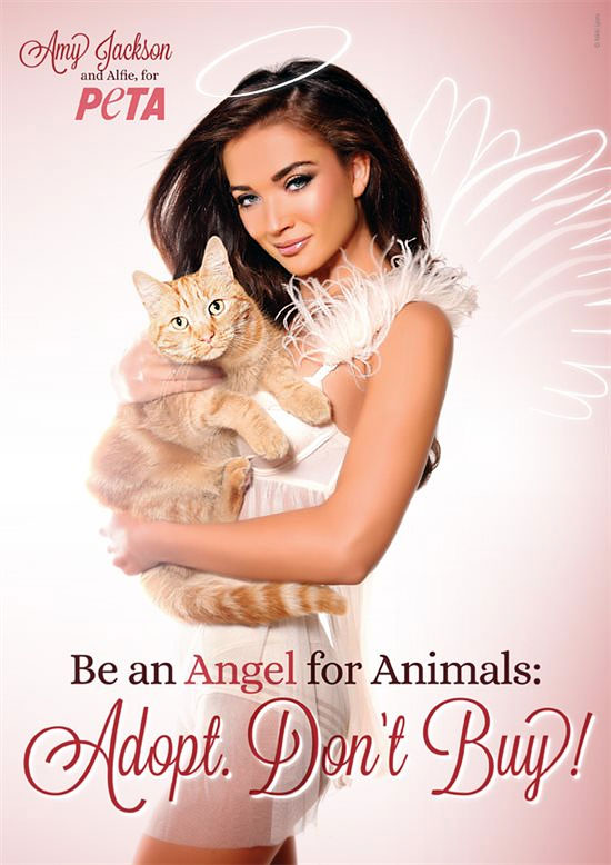 Amy Jackson new face for Peta India