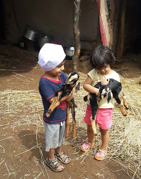 Young kids play with goats in the folk village of Purushwadi.