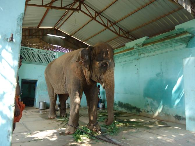 P Manimegalai also fights against cruelty to elephants