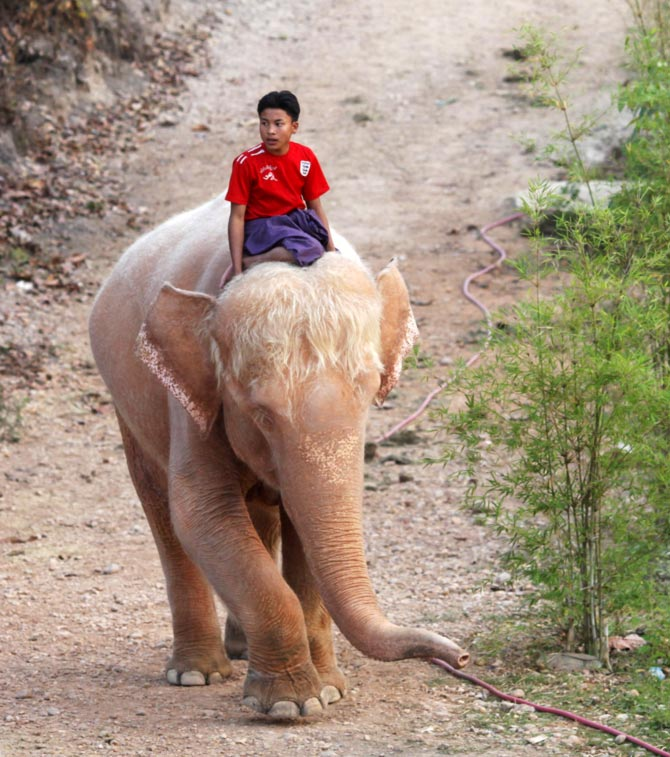 A man rides a white elephant at a camp near Uppatasanti Pagoda in Myanmar's new capital city Naypyitaw. What does the phrase 'white elephant' refer to?