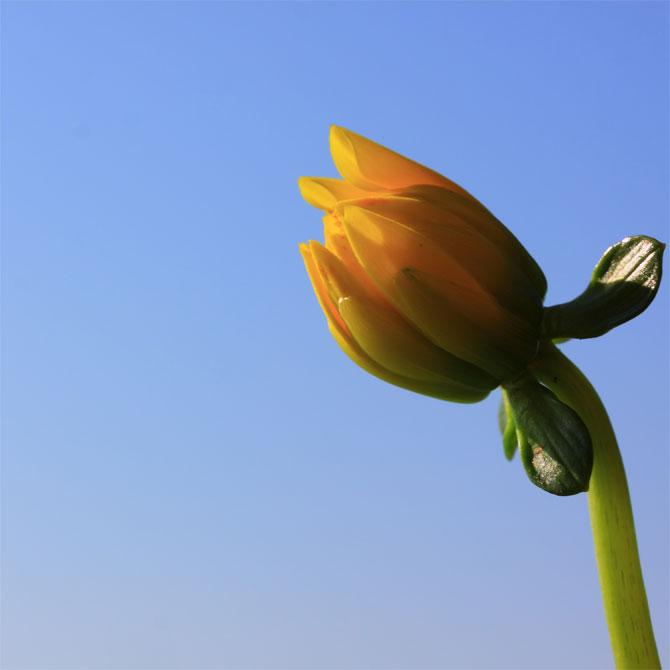 Rise and shine: 5 ways to wake up feeling fresh every morning