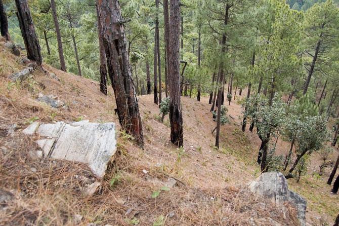 Walks and trails in Sonapani