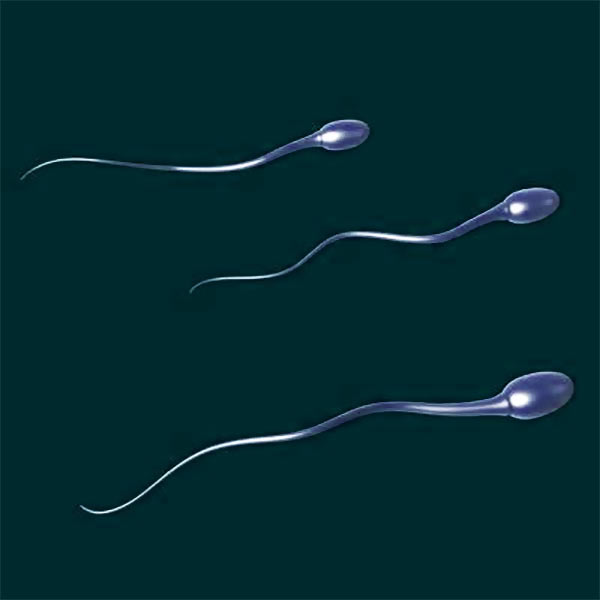 Male infertility linked to early death