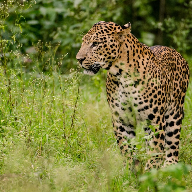 Latest News from India - Get Ahead - Careers, Health and Fitness, Personal Finance Headlines - #Kabini: What do you do when the wild calls?