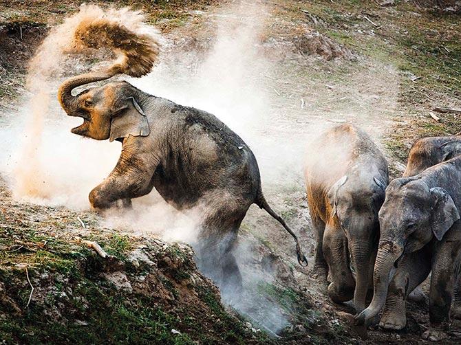 21 Award-winning Wildlife Photographs Of The Year
