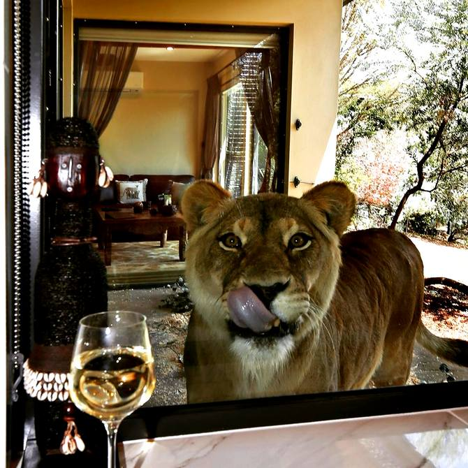 Latest News from India - Get Ahead - Careers, Health and Fitness, Personal Finance Headlines - Excuse me, there's a lion near my wine