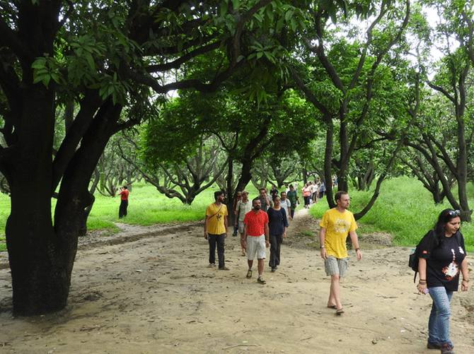 Latest News from India - Get Ahead - Careers, Health and Fitness, Personal Finance Headlines - On the mango trail in Rataul