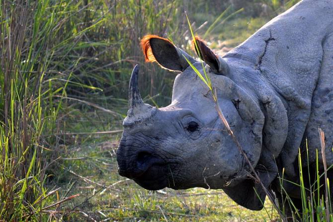 Latest News from India - Get Ahead - Careers, Health and Fitness, Personal Finance Headlines - The return of the one-horned rhino