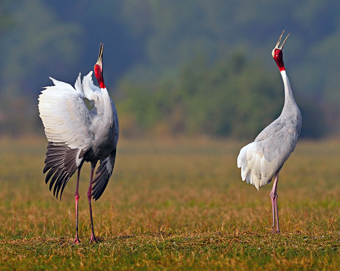 Latest News from India - Get Ahead - Careers, Health and Fitness, Personal Finance Headlines - 10 wildlife photos that'll amaze you