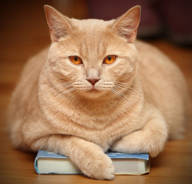 Latest News from India - Get Ahead - Careers, Health and Fitness, Personal Finance Headlines - 8 weird but effective tips to ace CAT
