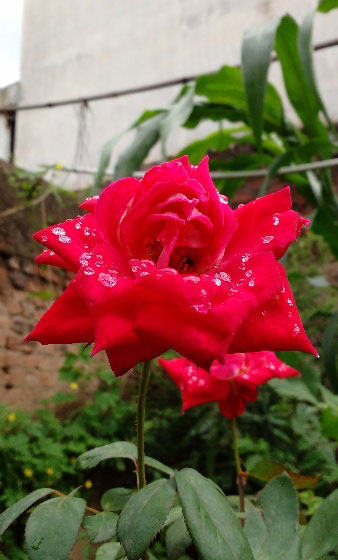monsoon pics
