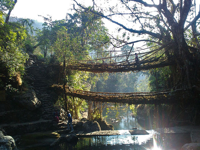 The double layered root bridges of Nongriat village
