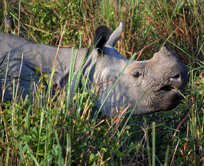 Latest News from India - Get Ahead - Careers, Health and Fitness, Personal Finance Headlines - Running with rhinos