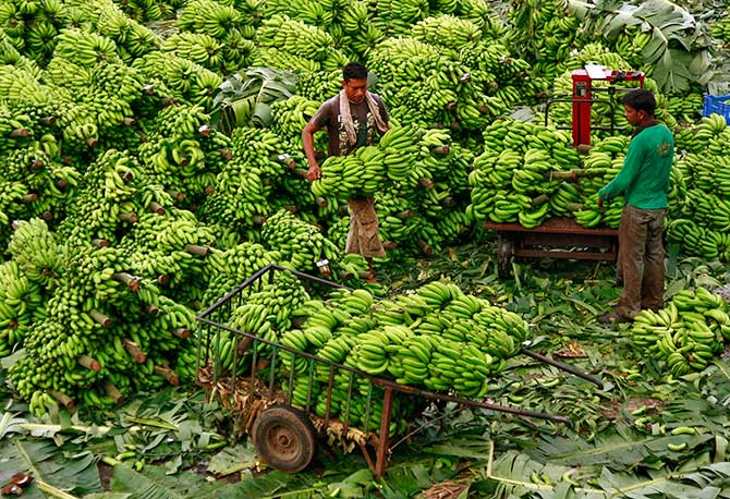 A workers carries bananas to load in a cart at a wholesale market, Kochi, November 28, 2013. Photograph: Sivaram V/Reuters