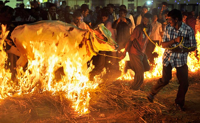 Pix How India Celebrates Makar Sankranti Pongal Lohri And Bihu