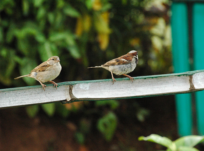 World sparrow day responses by rediff readers