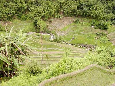 Fascinating greenery of Nagaland
