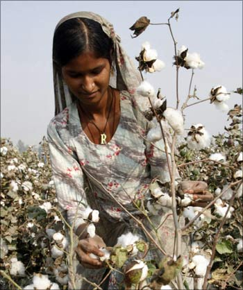 A woman picks cotton at a field in Multan, Pakistan.