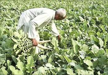 A farmer works on his vegetable field on the outskirts of Jammu.
