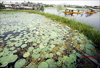 Boatmen row their boats past lotus leaves in the Dal Lake in Srinagar.