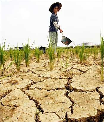 A Chinese farmer waters dry fields on the outskirts of Guangzhou in China.