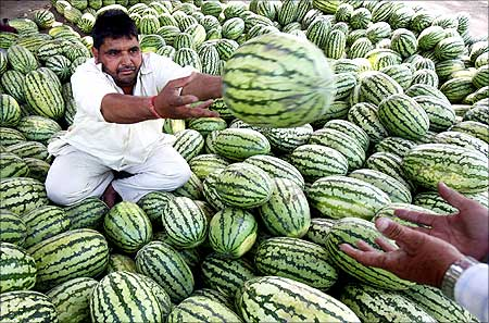 A roadside vendor throws a watermelon towards his customer in the northern Indian city of Chandigarh.