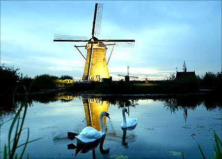 A pair of swans swim in front of a lit up windmill at dusk in Kinderdijk, The Netherlands.