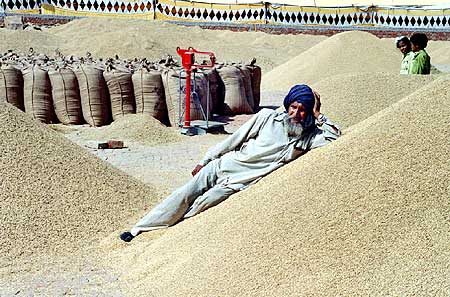 An Indian farmer rests on the heap of paddy while awaiting for prospective buyers.