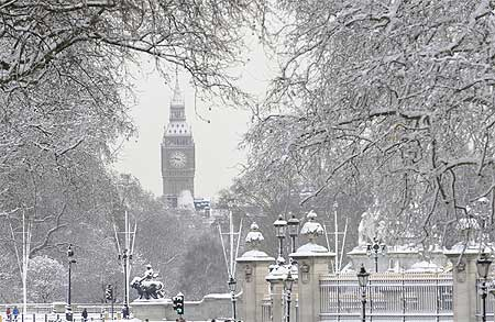 Snow covered trees in front of the Houses of Parliament in central London