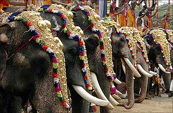 Decorated elephants take part in the Trichur Pooram festival in Trichur in Kerala.