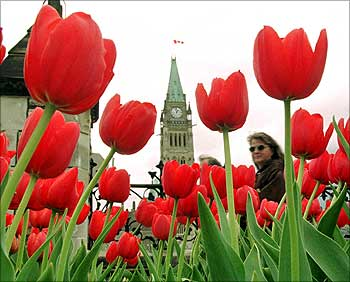A woman walks past a bed of tulips planted in front of Parliament Hill in Ottawa.