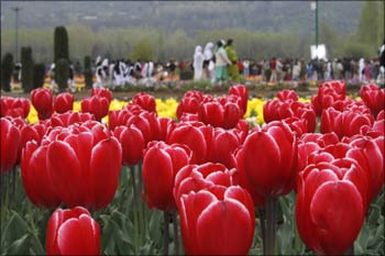 Tourists walk inside Kashmir's tulip garden in Srinagar.