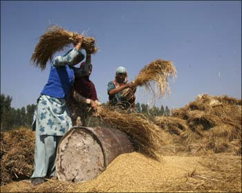 Indian farmers have been hit hard by globalisation.