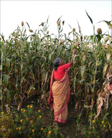 Of Kisan Swaraj and farmer suicides