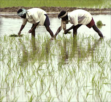 Orissa: 10,991 villages lost over 50% crop