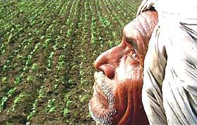 India News - Latest World & Political News - Current News Headlines in India - 89 Gujarat farmers committed suicide in last four years: Govt
