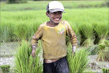 Thy Channa, 13, who earns 5,000 riel ($1.20) per day, smiles as he works on the rice field during his school vacation, in Kampong Speu province, west of Phnom Penh.