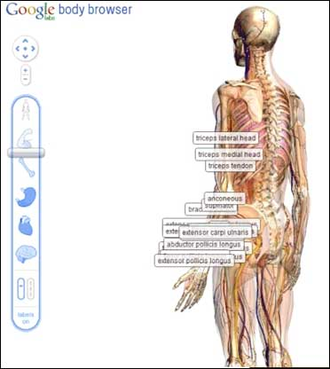 Browser to map human body.