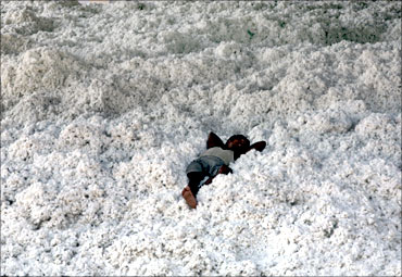 A worker rests on a heap of cotton inside a cotton factory near Ahmedabad.