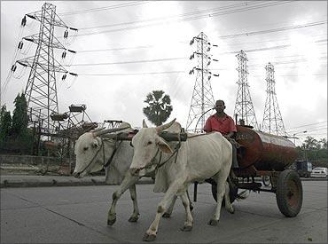 A bullock cart transports kerosene.