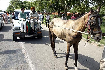 Activists from Bharatiya Janata Party (BJP) use a horse to pull their car during a protest rally.