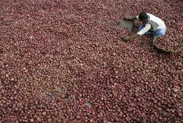 Onions: Import duties abolished; exports banned